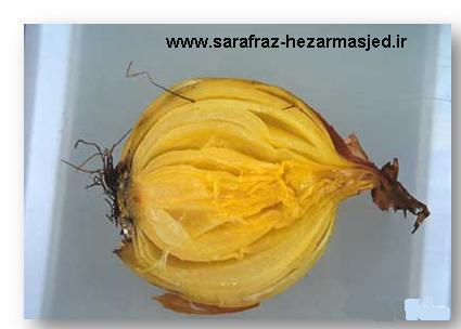 www.sarafraz-hezarmasjed.ir