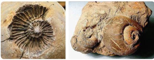 فسیل های داخلی و خارجی