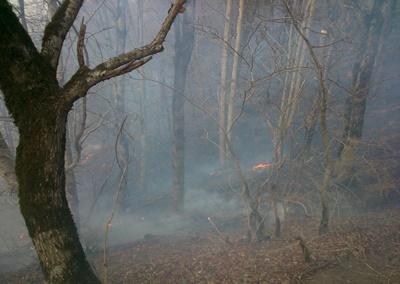 آتش سوزی جنگلهای روستای دولت آباد و نصفی