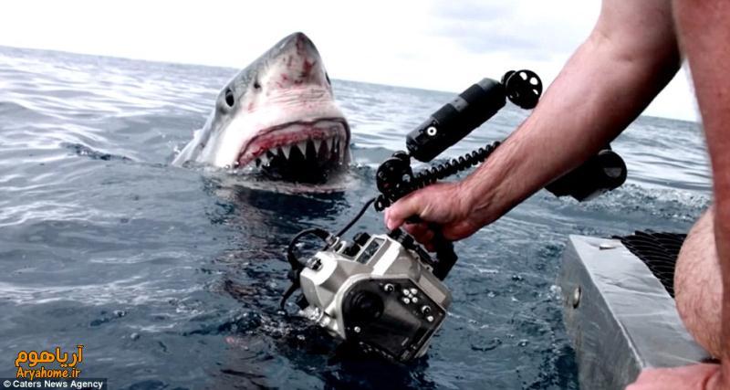 علاقه حیوانات وحشی به دوربین عکاسی +تصاویر , تصاویر دیدنی