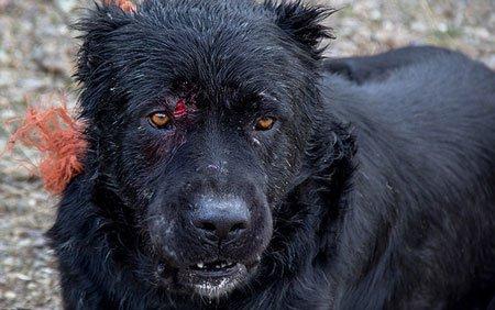 لذت برخی از ایرانیان از جنگ خونین سگ ها , اخبار گوناگون