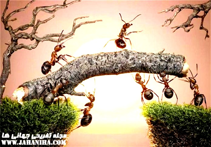 http://s7.picofile.com/file/8240137934/MURCHE_HAA_2.jpg