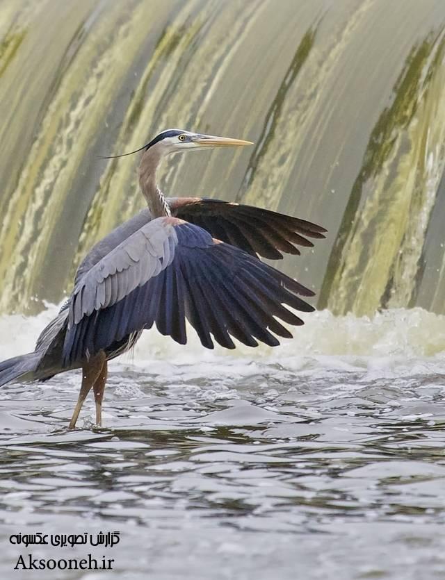 عکسهای زیبا از رویایی ترین آبشارهای دنیا