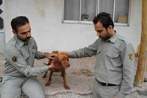 ضارب بی رحم سگ شکاری بازداشت شد , حوادث