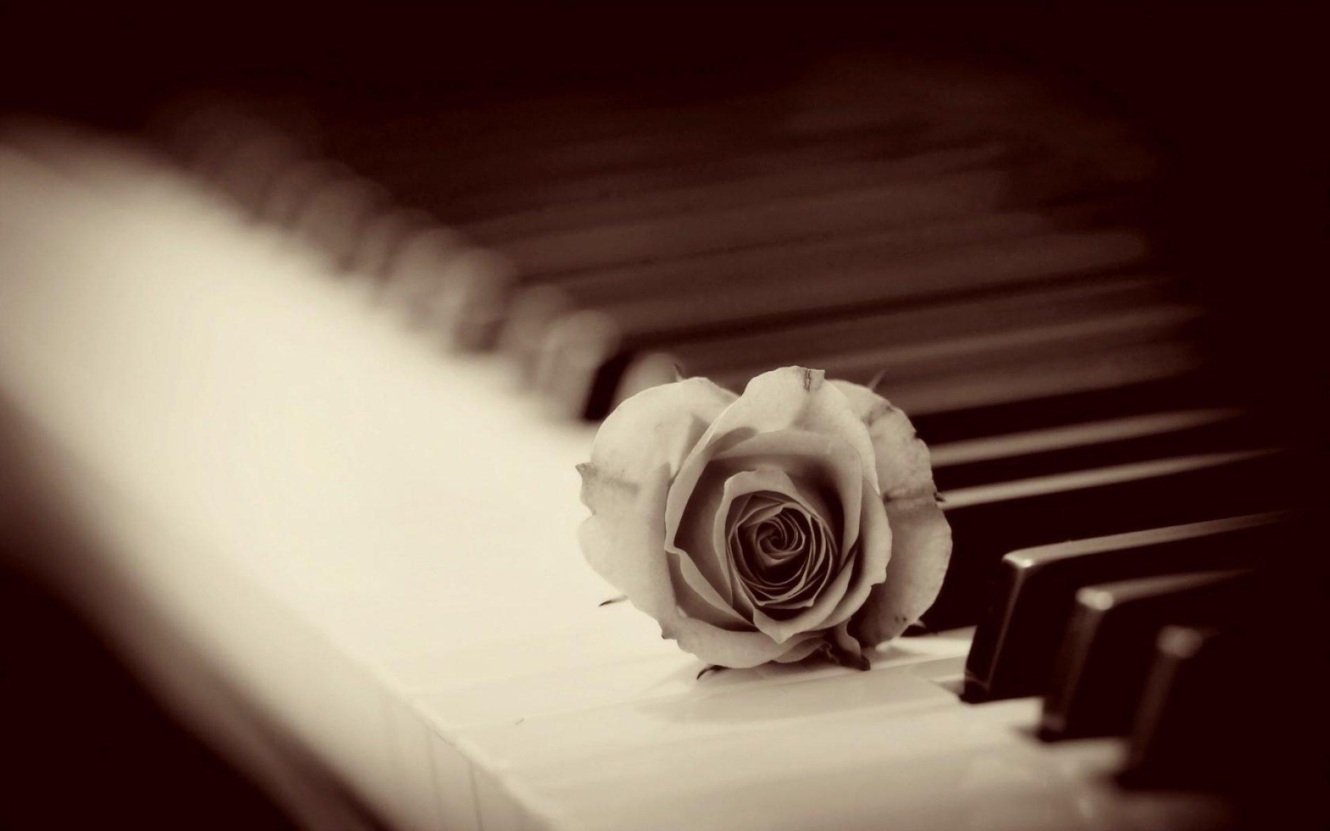 ای عشق مرا بیشتر از پیش بمیران