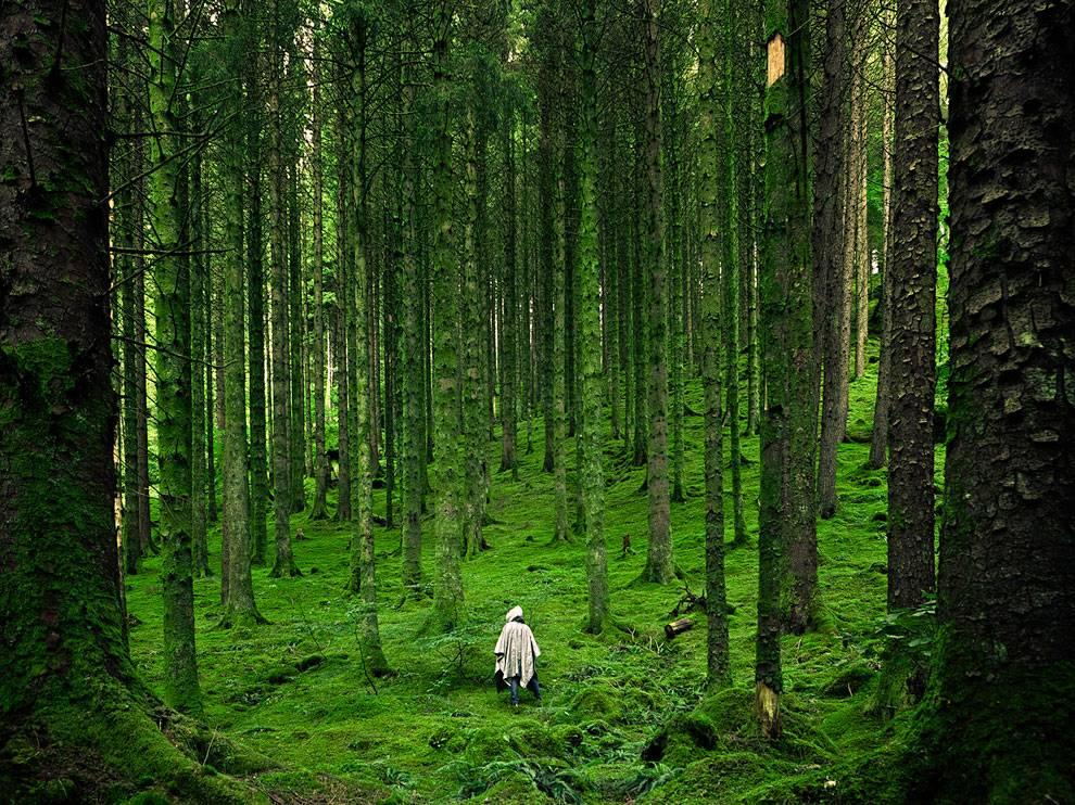 عکس های زیبا از طبیعت و حیوانات برای تصویر زمینه و دسکتاپ