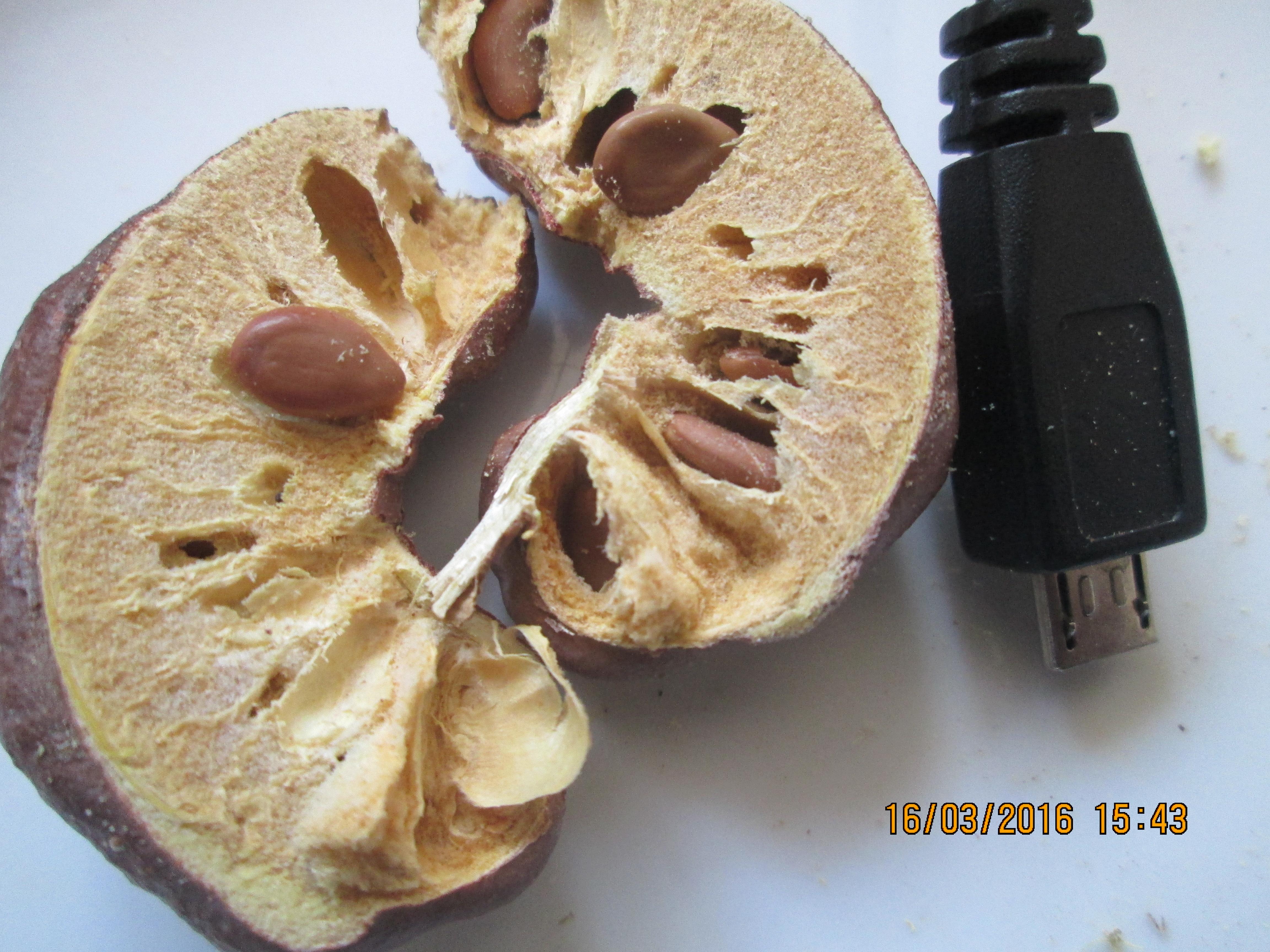 میوه برش خورده کهورک نصف شده