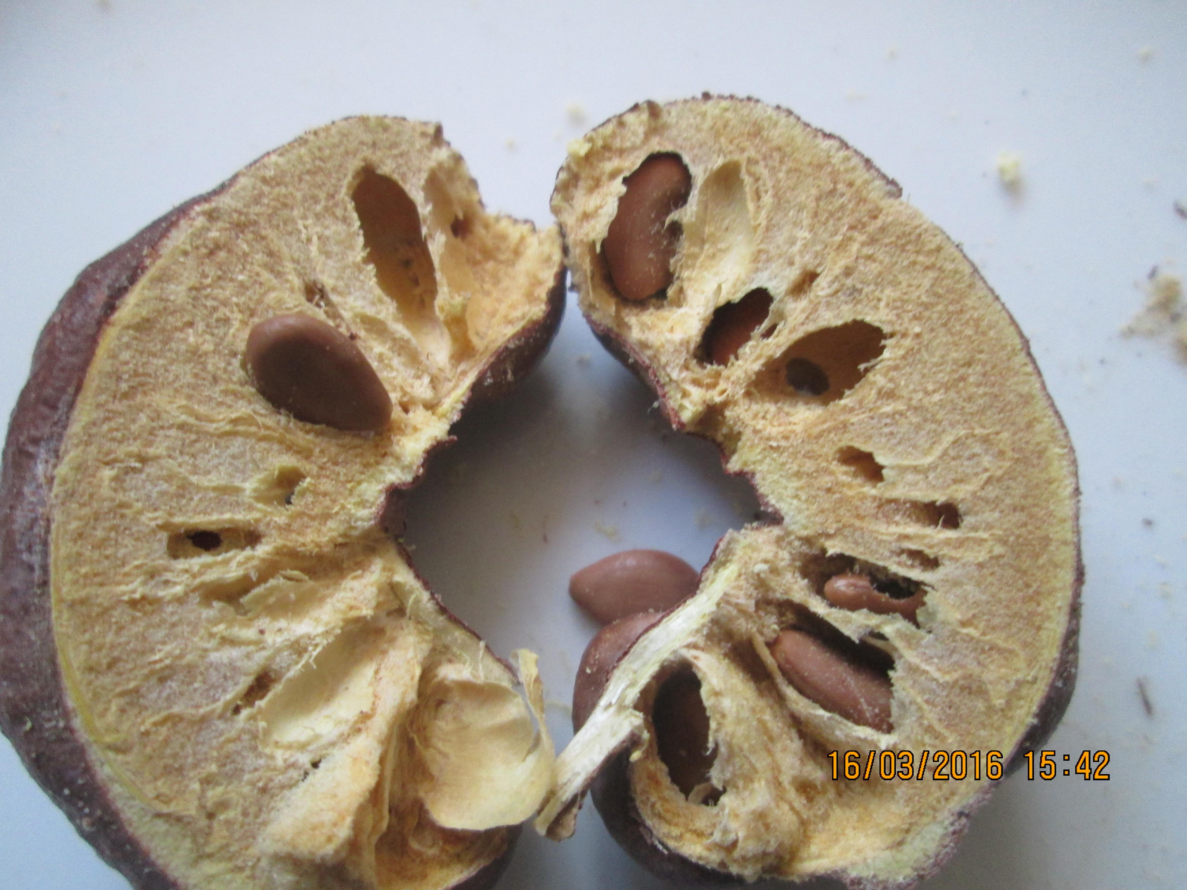 میوه نصف شده کهورک