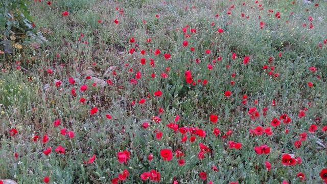 دامنه کوه بزی در روستای هلک شهرستان کازرون/اوایل بهار 95