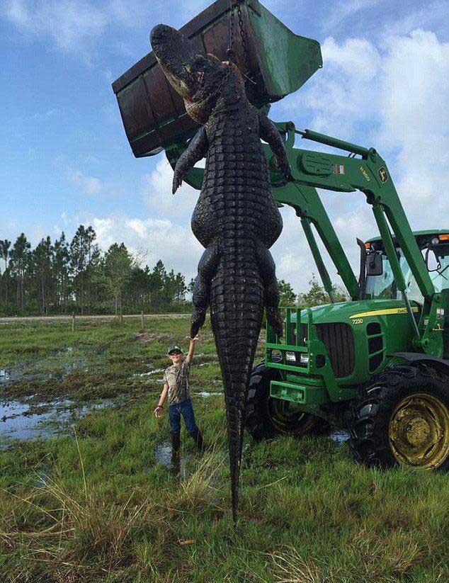 شکار تمساح 5 متری در فلوریدا , اخبار گوناگون