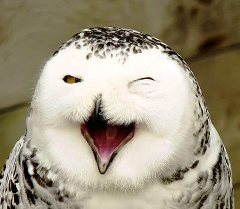 عکس های بامزه از خندیدن حیوانات , جالب و خواندنی