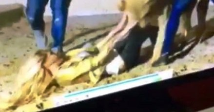 حمله شیر گرسنه به خواننده زن سرشناس عرب!! + عکس , چهره های معروف