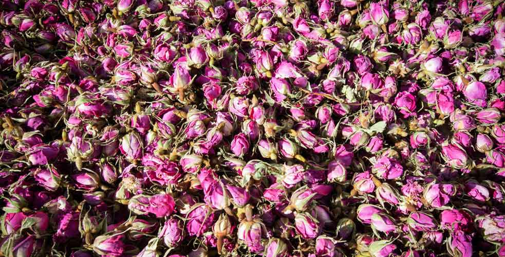 Iran Dry Rose Petals (Without hip)