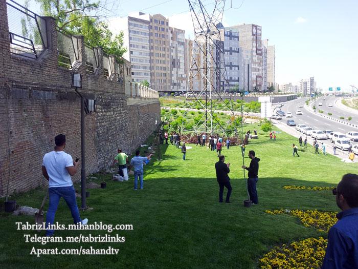 کمپین درختکاری تبریز