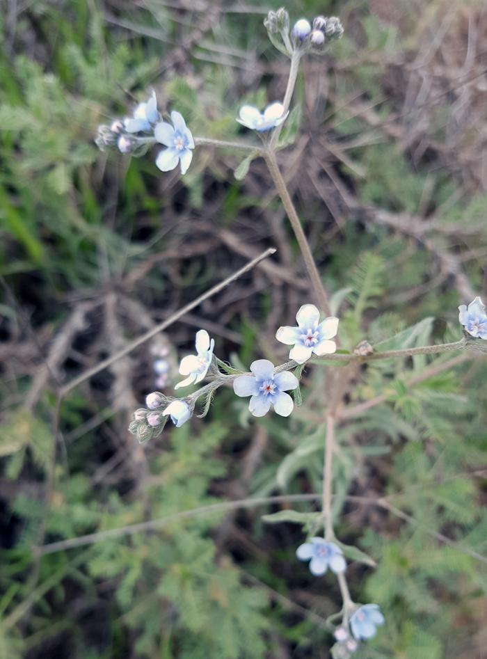 گل های بسیار زیبا و طبیعی