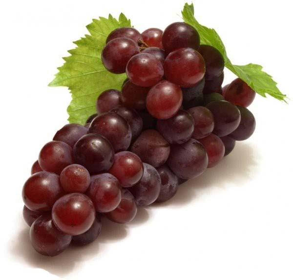 تحقيق « ميوه انگور »