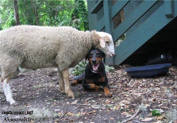 تصاویر زیبا از دوستی و همزیستی مسالمتآمیز حیوانات با یکدیگر