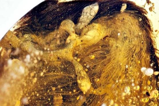 کشف بال سالم دایناسور ۹۹ میلیون ساله! , جالب وخواندنی