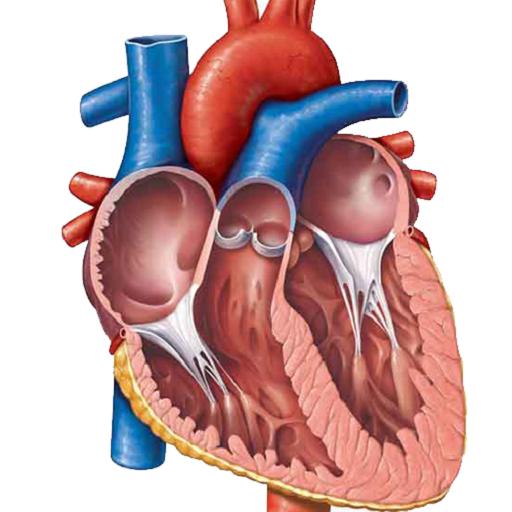 کتاب اندرویدی سیستم قلب و عروق