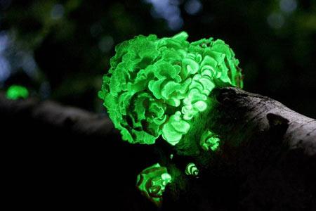 در ایران چند درصد از گیاهان منحصر به فرد دنیا است؟