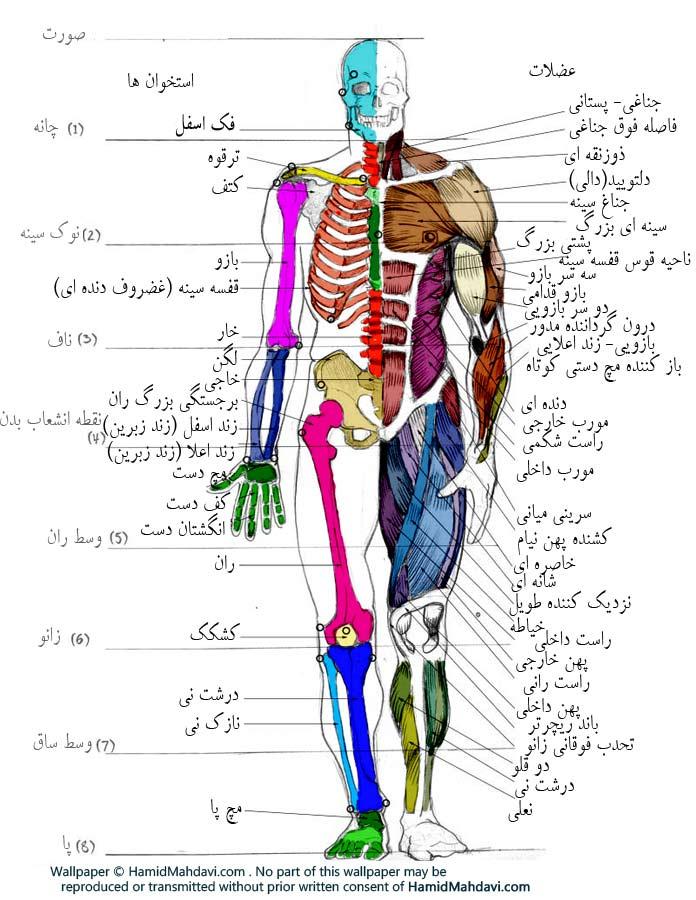 اطلس 3 بعدی آناتومی بدن انسان