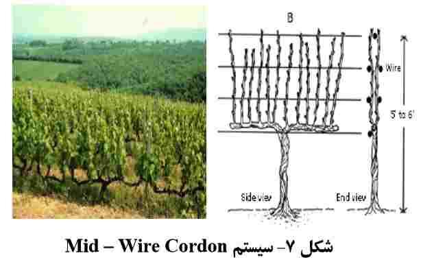 سیستم Mid – Wire Cordon
