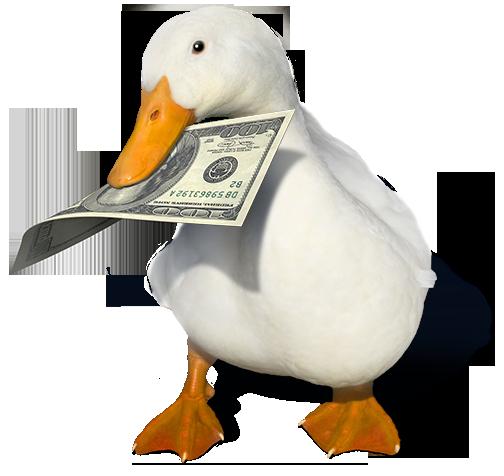 چگونه با اردک ها پولدار شویم؟