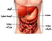 سم زدایی خون و تولید اوره وظیفه کدام ارگان در بدن است؟
