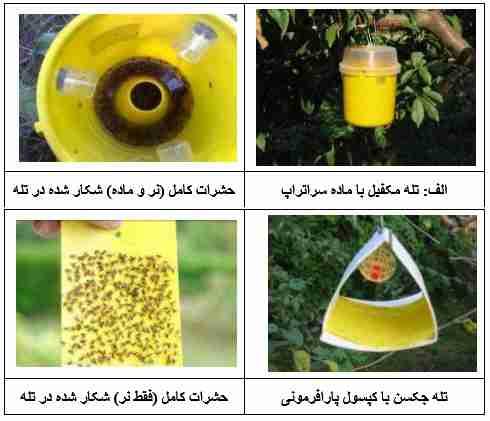تله های قابل استفاده برای مانیتورینگ مگس میوه