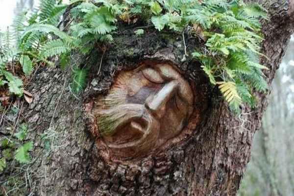 روزی به یک درخت جوان گفت کُندهای:  باشد که میزِ گوشهی میخانهای شوی!