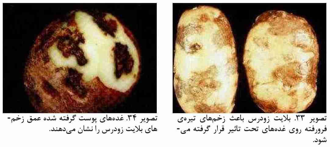 آتار بیماری بلایت زودرس سیب زمینی
