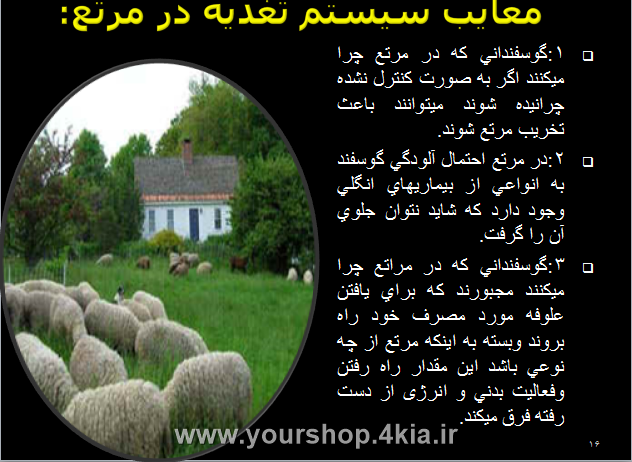دانلود مقاله چرای گوسفندان در مراتع - تغذیه میش در مرتع پاورپوینت ppt - چرای گوسفندان در طبیعت ، دانلود سمینار چرای گوسفندان ، دانلود رایگان