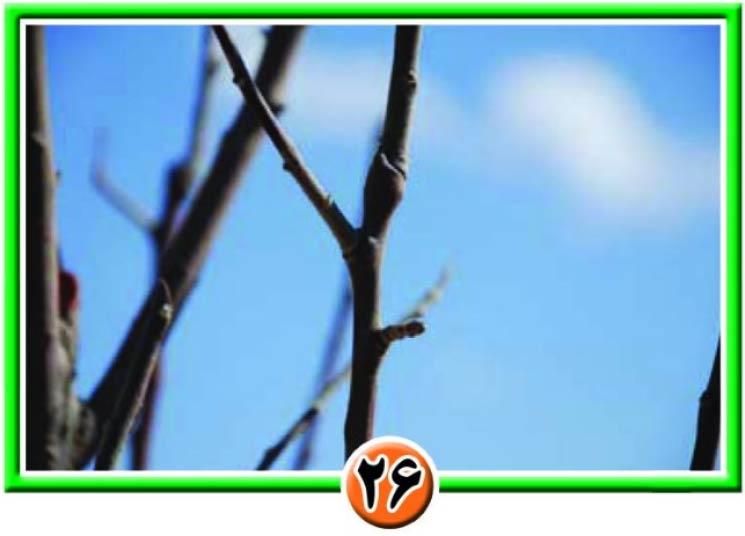 تثبیت گلدهی و مشاهده دو شاخه در قسمت فوقانی