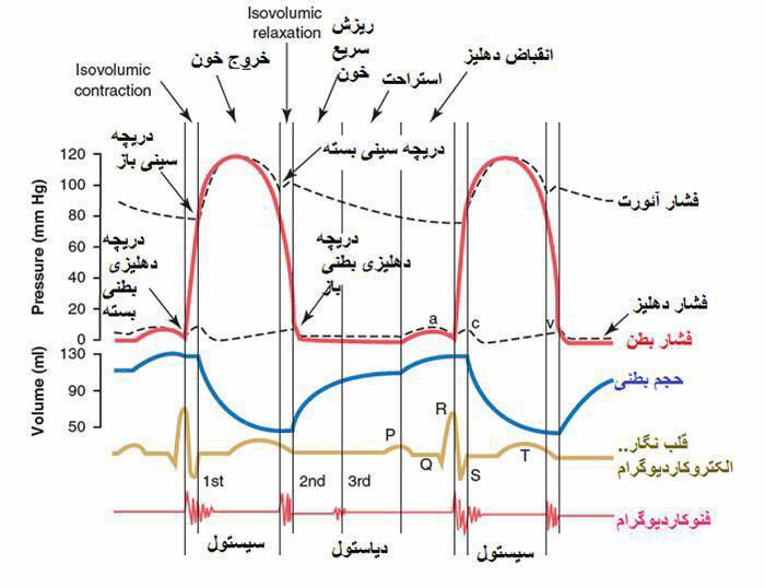 تدریس مدرس زیست شناسی آزمون جامع مدارس و کنکور سراسری در تهران و شهرستان