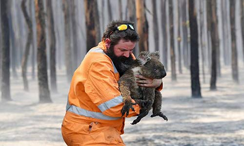 آیا واقعا نیم میلیارد حیوان در آتشسوزیهای استرالیا کشته شدهاند؟