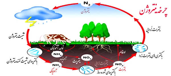 تحقیق در مورد چرخه ی نیتروژن - پایه نهم