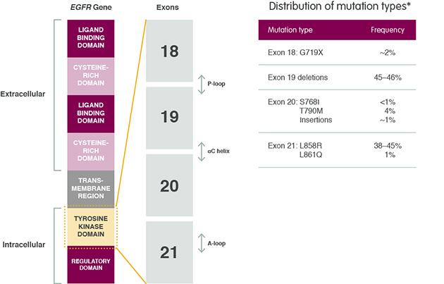 و بررسی 85 موتاسیون در ژن EGFR به روش Real time PCR
