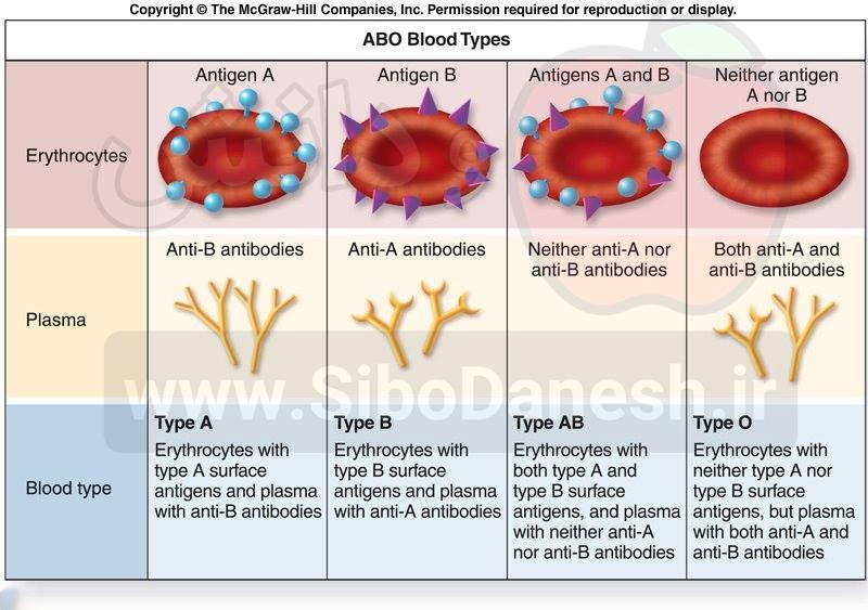 چگونه آنتی بادی علیه آنتی ژن گروه خونی در بدن فردی که سابقه ی دریافت خون ندارد نیز وجود دارد؟
