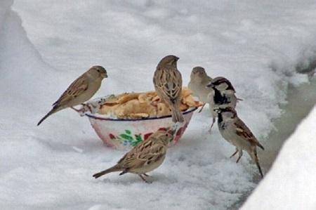 زمستان و مهربانی با حیات وحش در آستارا