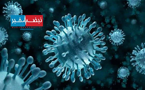 ویروس جدیدی در برزیل کشف شد